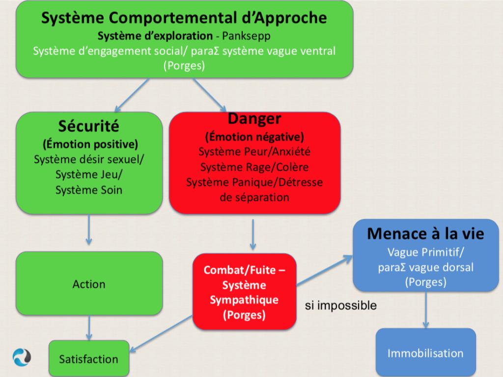 Shéma d'articulation des systèmes motivationnels de Panksepp